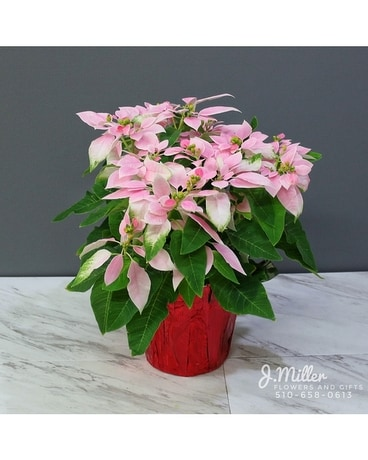 Pink Poinsettia Flower Arrangement