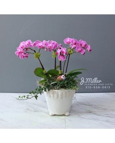Lavender Mini Orchid Garden
