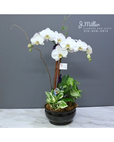 Large Orchid Bowl Flower Arrangement
