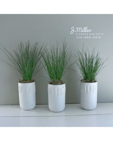 Trio of Modern Grass Flower Arrangement