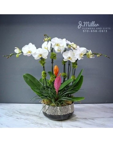 Orchid Garden with bromeliads (**new design!**) Flower Arrangement