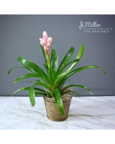 Bromeliad Plant Collection Flower Arrangement