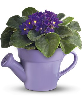 Teleflora's Spring Showers African Violet Flower Arrangement