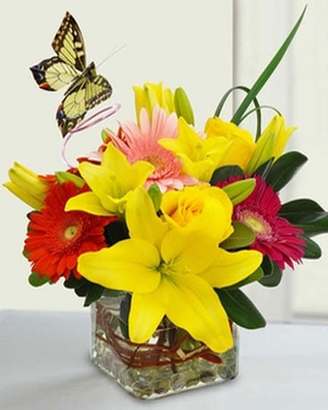 Bright & Cheery Butterfly Cube Flower Arrangement