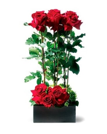 Scarlet Splendor Roses Flower Arrangement