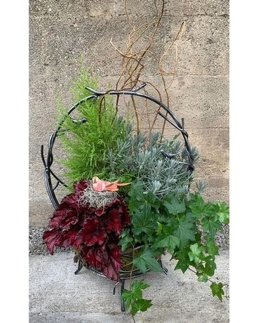 Vining Bird Basket Planter Plant