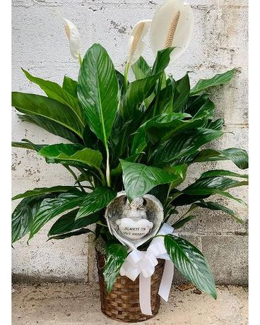 Always in our hearts Peace Lily Plant Plant
