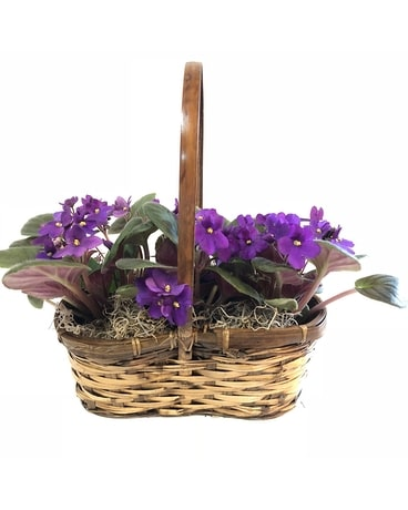 Trio of Violets Flower Arrangement