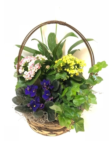 Blooming Dish Garden Plant