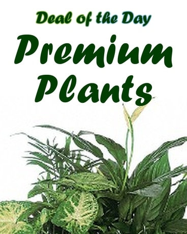 Premium Plants Flower Arrangement
