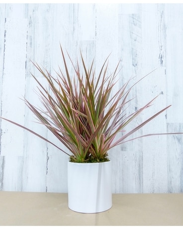 6 Inch Dracaena Plant Flower Arrangement