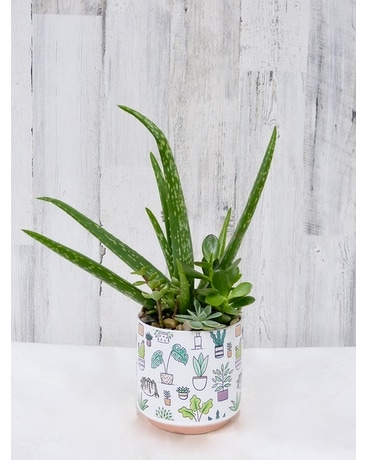 Say Aloe to my little friend Plant
