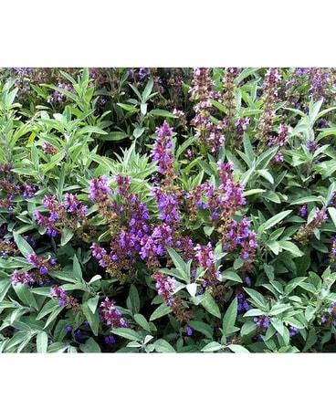 Foliage Plants Delivery Largo FL - Rose Garden Florist
