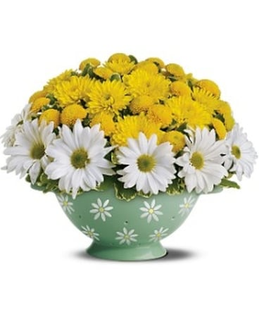 Teleflora's Daisy Colander Bouquet Flower Arrangement