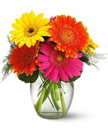 Fiesta Gerbera Vase Flower Arrangement
