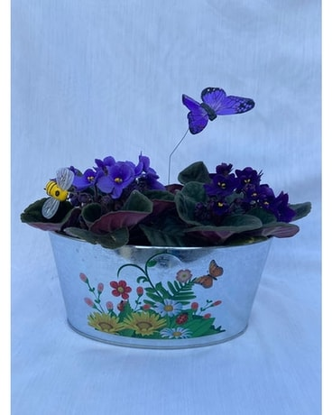 Touch of Spring African Violets Flower Arrangement