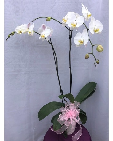 Beautiful Phalaenopsis White Orchid Flower Arrangement