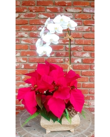 Poinsettia with Orchid Plant Plant