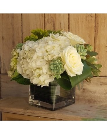 Hydrangea And Succulent In Campbell Ca Citti S Florists