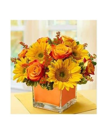 Golden Sunflowers - by Citti's Florists Flower Arrangement