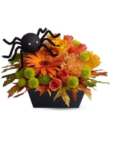 Cute n' Creepy - by Citti's Florists
