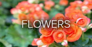 Flower Delivery to Orlando by Colonial Florist