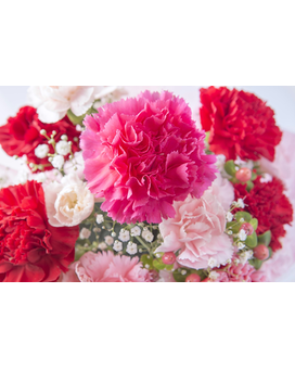 24 Mixed Carnations Flower Arrangement