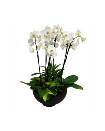 Grand Orchid Garden Flower Arrangement