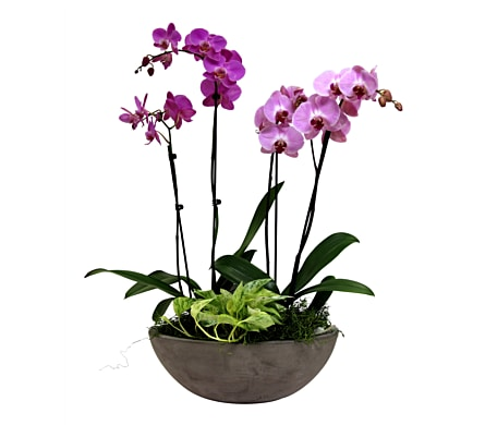 Newport Orchid Garden Flower Arrangement