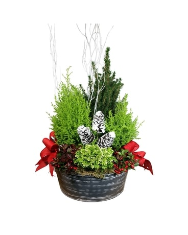 Christmas Plants Delivery St Clair Shores Mi Conner Park Florist