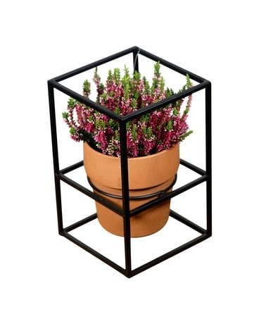Heather Plant - Geometric Design Plant