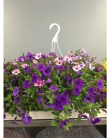 12 Inch Hanging Basket Multi Colored Plant