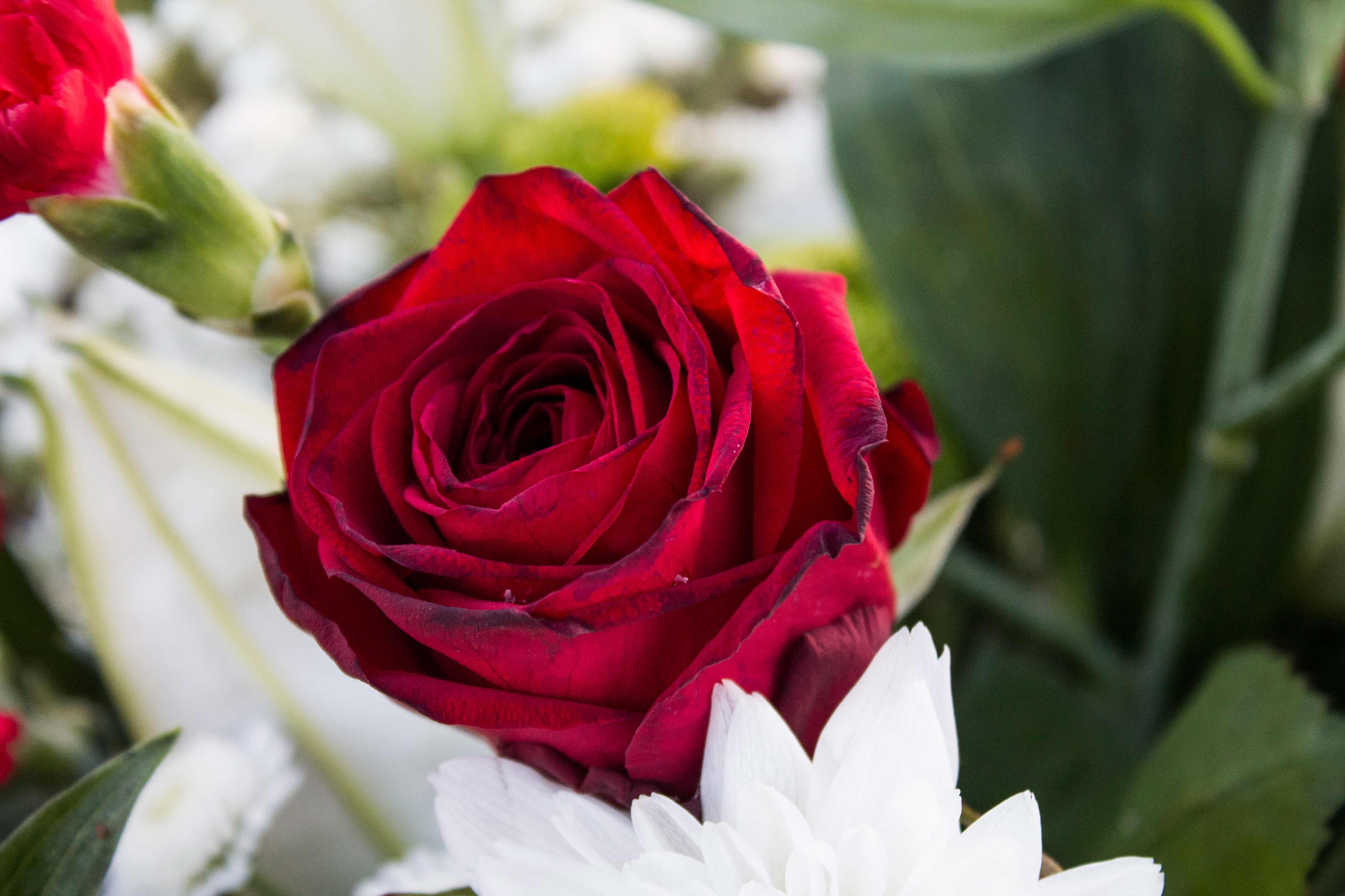 Farmington Hills Mi Floral Arrangements Services West Bloomfield