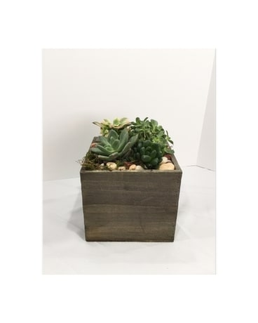 Succulent Box Large