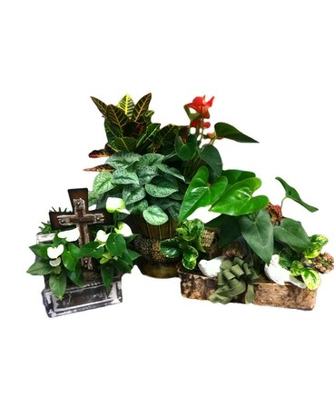 Designer Dish Garden In Pascagoula MS Pugh's Floral Shop Inc Stunning Dish Gardens Designs