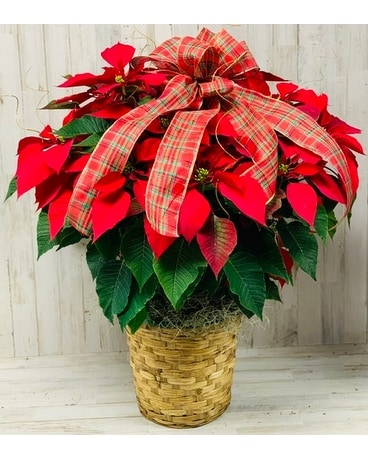 Large Poinsettia-Red
