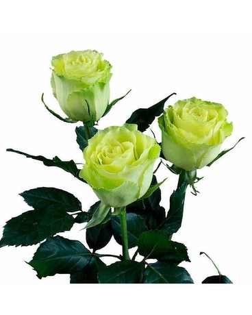 Green Rose Flower Arrangement