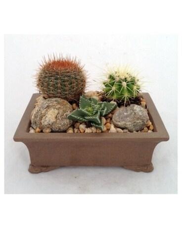 Small Cactus Garden