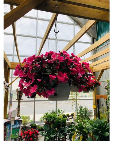 Hanging Plant Flower Arrangement