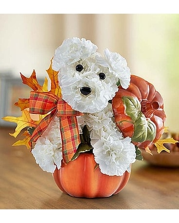 Puppy in my pumpkin Flower Arrangement