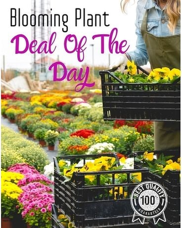 Blooming Deal of The Day Plant