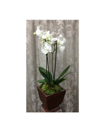 Orchid Plant in Ceramic Base Flower Arrangement