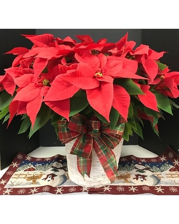 Large Poinsettia Flower Arrangement