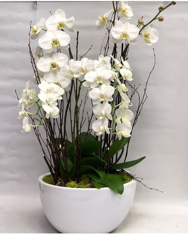Ultimate White Orchids Custom product