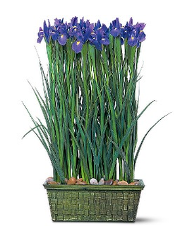 Iris Garden Flower Arrangement