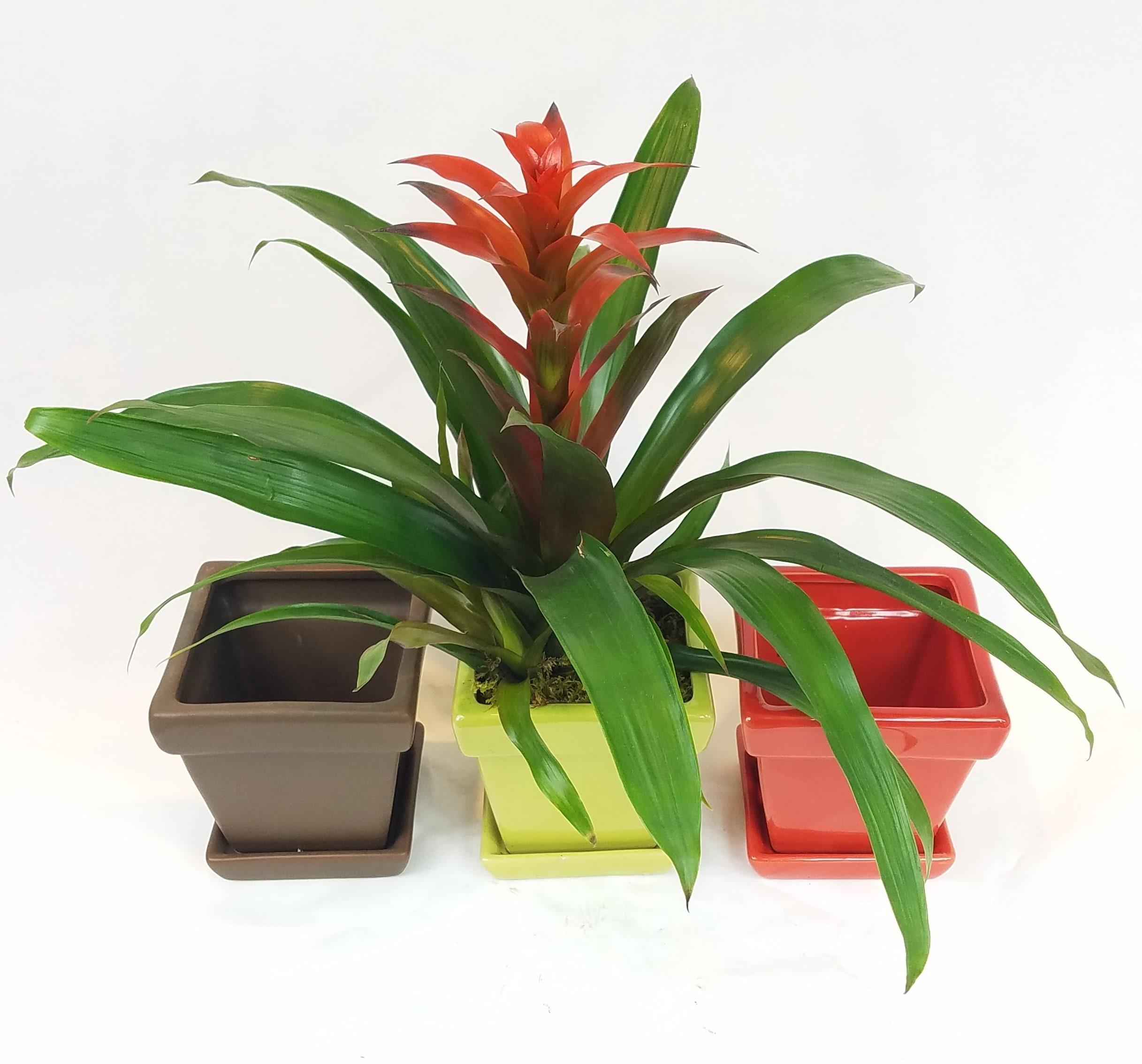 About Blumz   by JRDesigns - Ferndale, MI Florist