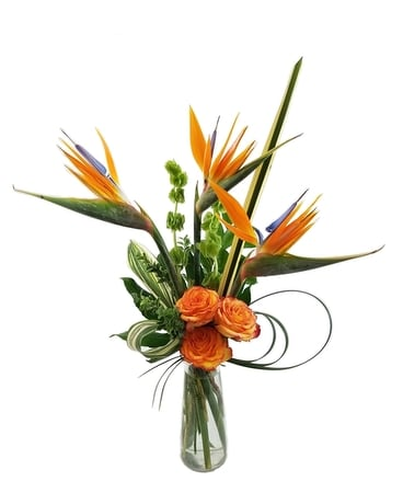 Free Spirits Fly Flower Arrangement