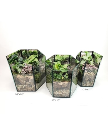 Hexagonal Mirrored Terrarium Plant