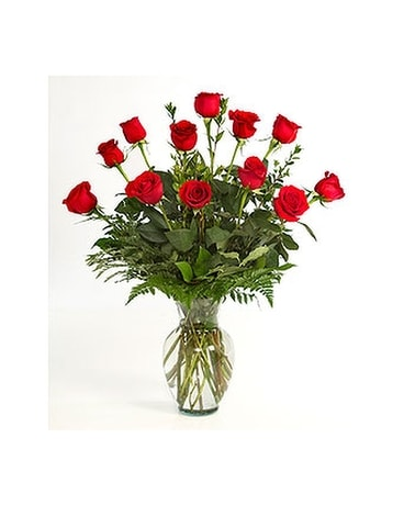1 Dozen Red Roses Arranged w/ Baby Breath