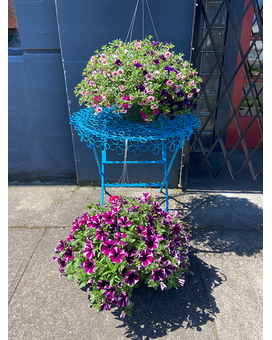 Hanging outdoor Basket (Color Will Vary) Plant